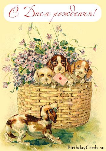 Щенки миттельшнауцера, щенки среднего шнауцера, щенки